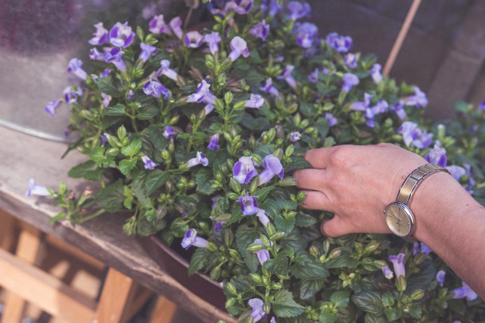 Kvety Kolesárová