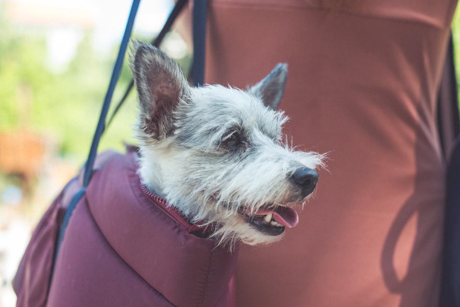Zuzana Stanová pes
