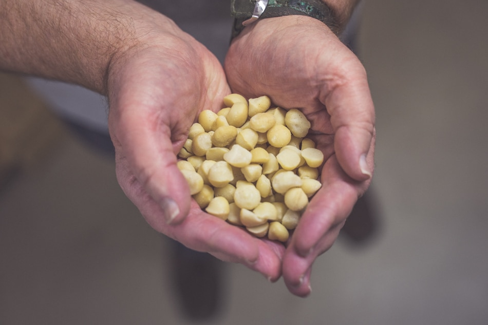 Nadácia-Integra-fair-trade-orechy