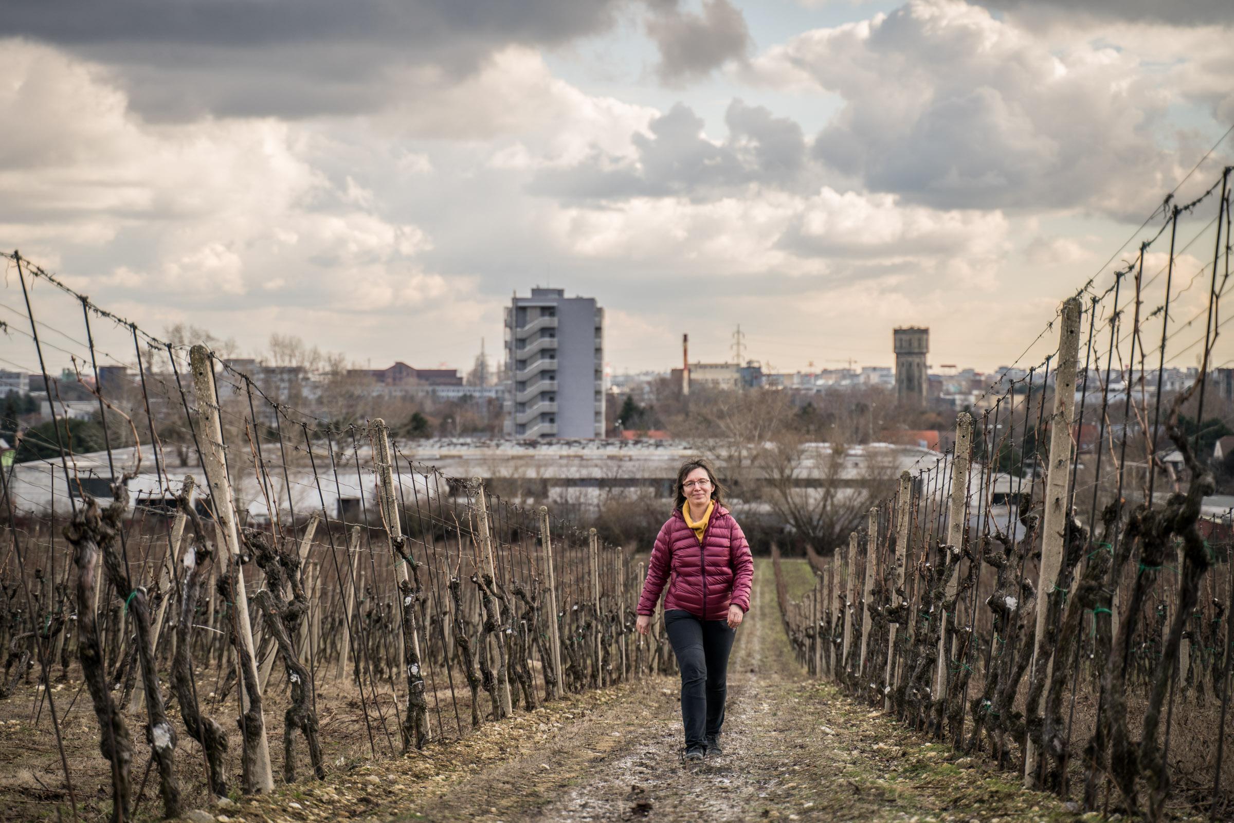 Mária Bieliková vo vinohradoch